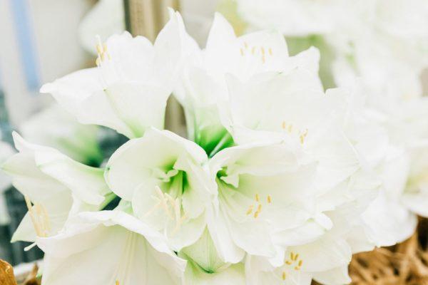 Naturel, votre fleuriste PRESS -EVENEMENT-créateur à PARIS (32)