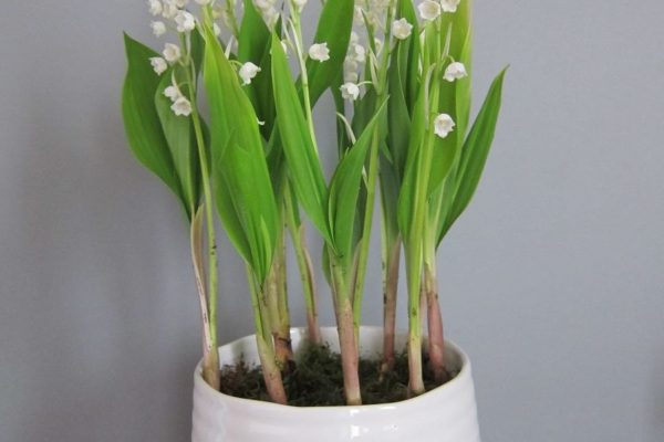 drissia-fleuriste-mariage-PRINTEMPS (4)